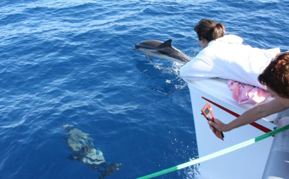 Guided by dolphins